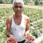 Jammu Farmer Boosts Income 40 Times by Choosing Organic Strawberries Over Wheat
